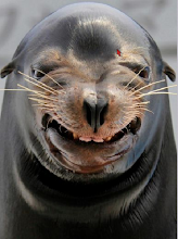 Qui sorridono, pure, i leoni marini