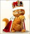 Amo esse gato..