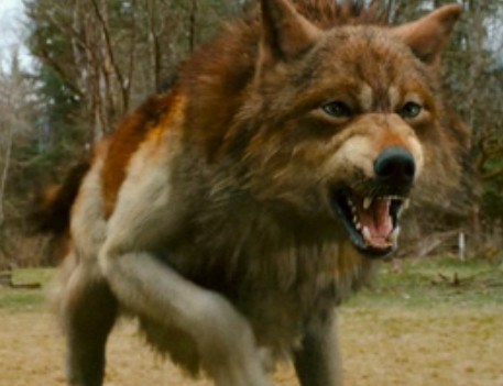 Jacob Black Wolf and Human