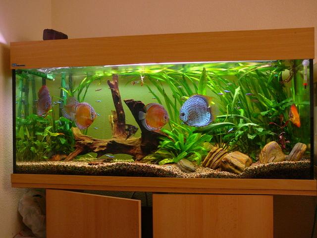 Acuarios spetyone tipos de acuario for Peces de agua dulce para peceras