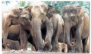 Gajah lebih 'bahagia' di Malaysia