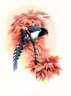 Here are some amazing artwork pictures of the Birds