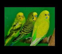 Parkit Bird