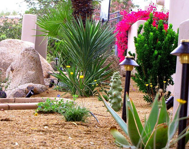 Desert Landscape Designs for Backyards 640 x 506