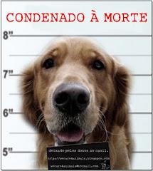 Condenado á MORTE!