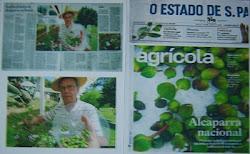 Safra pioneira de alcaparras no Brasil