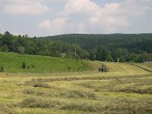 Doing Hay