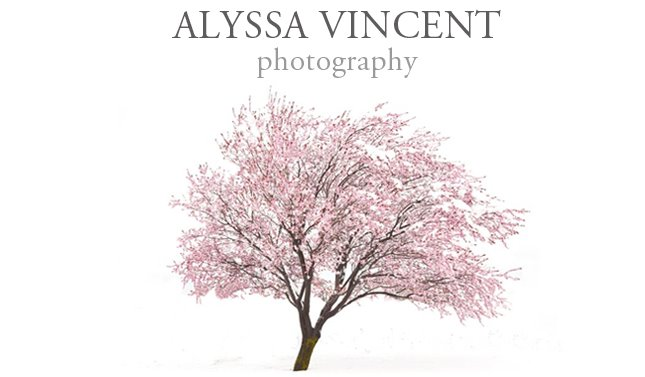 Alyssa Vincent Photography