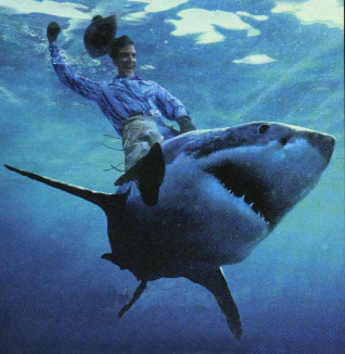 Cowboy on a shark
