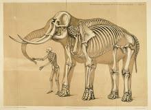 .elephants.