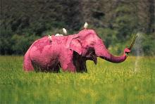 .pink elephant.