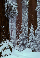 .redwood snow.