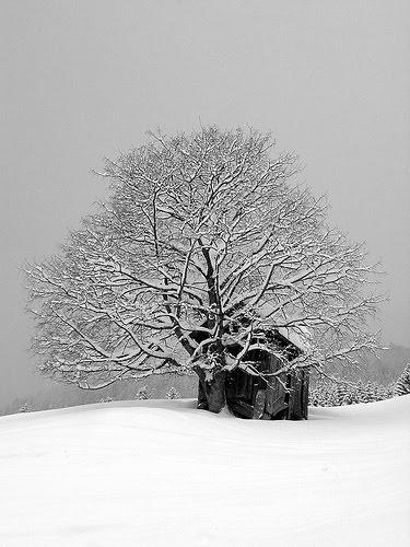 [Winter+Wonderland]