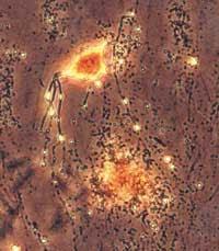 Sinapsis entre dos neuronas
