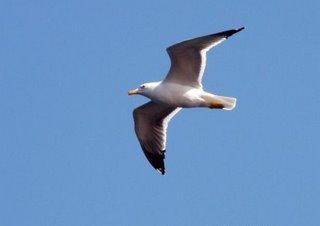 [flying_bird_fujairah_2[1][1].jpg]