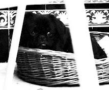 Mi perro Luki