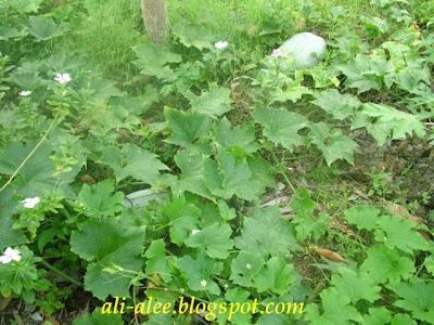 http://2.bp.blogspot.com/_ZZwzbJb5JFc/R6u-8GfQRkI/AAAAAAAAAF4/0bBJHd3bPN4/s400/Kundur%2BPlant.JPG