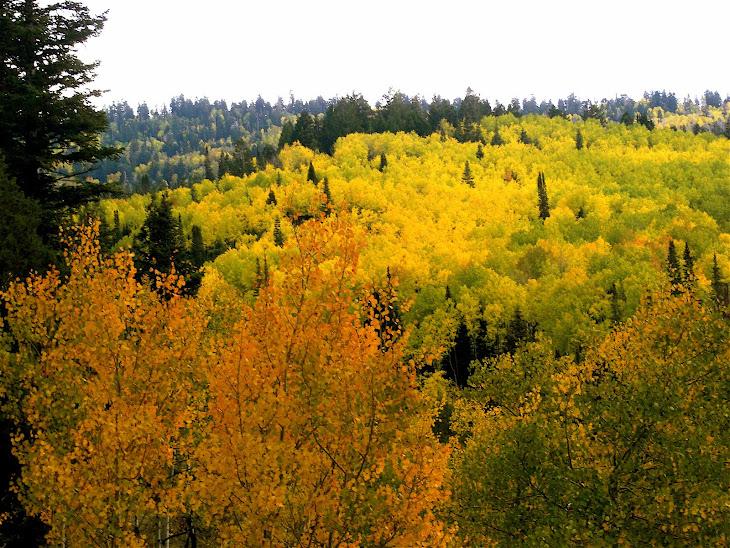 Fall '08 Nebo Loop