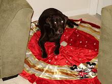 Eden -- Christmas Prep 2008