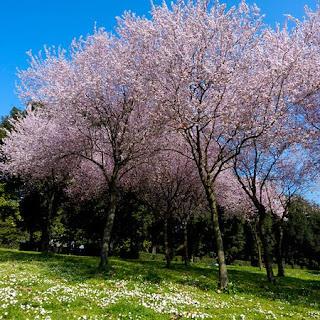 paesaggio di primavera