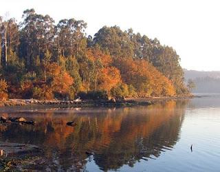 Bosque y río gallego