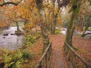 Bosque de Castaños Galicia