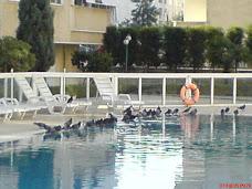 Havuzda Kuşlar
