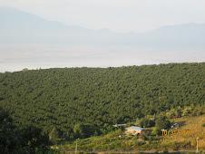 Aguacate-Panoramica