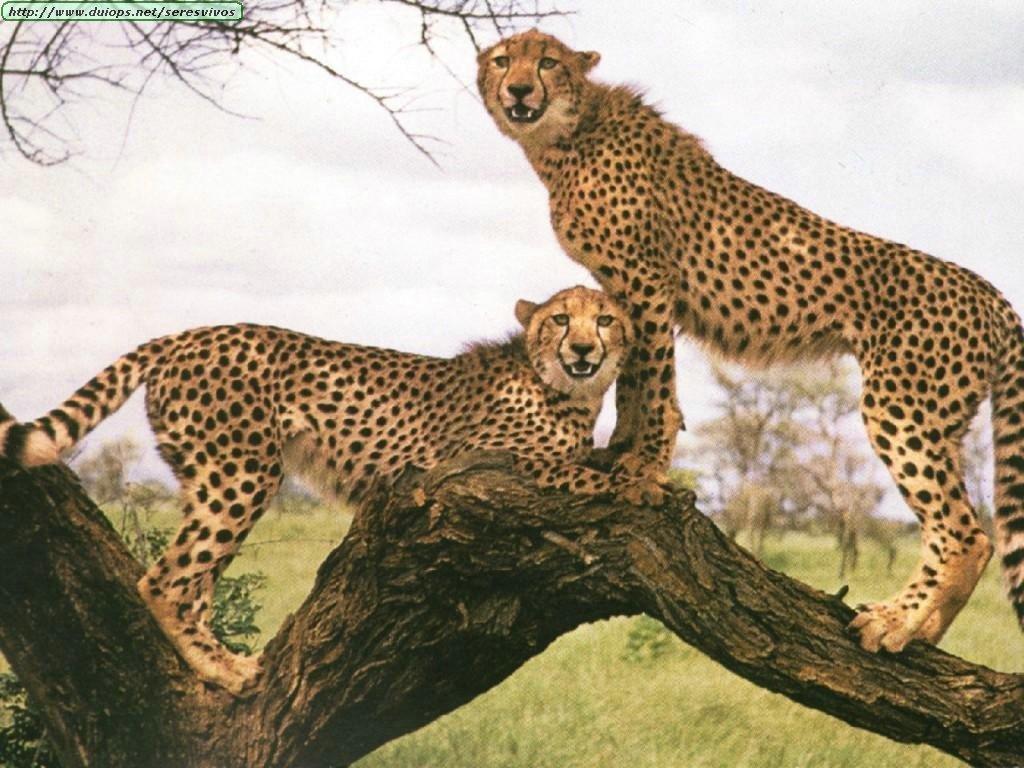 http://2.bp.blogspot.com/_ZcBdnpWmzGI/TIvaLSQ3NnI/AAAAAAAAACk/VupMYj6aFdw/s1600/Wallpapers+-+Animales+by+Alms!!+(136).jpg