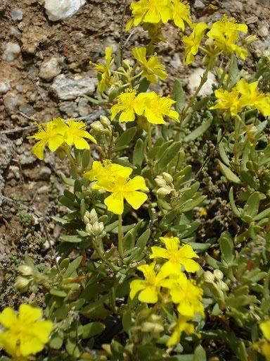El blog del jardin plantas forestales for Plantas forestales