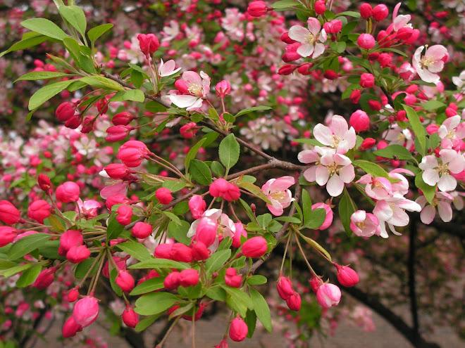 pink love. may 08