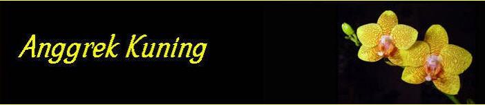 Anggrek Kuning