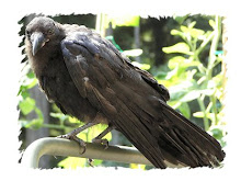 Crow Pictures: