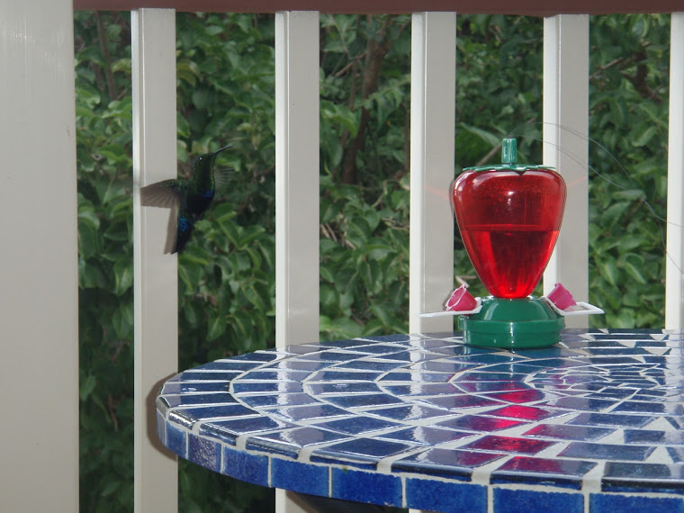 Hummingbird on our balcony