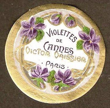 Violettes de Cannes