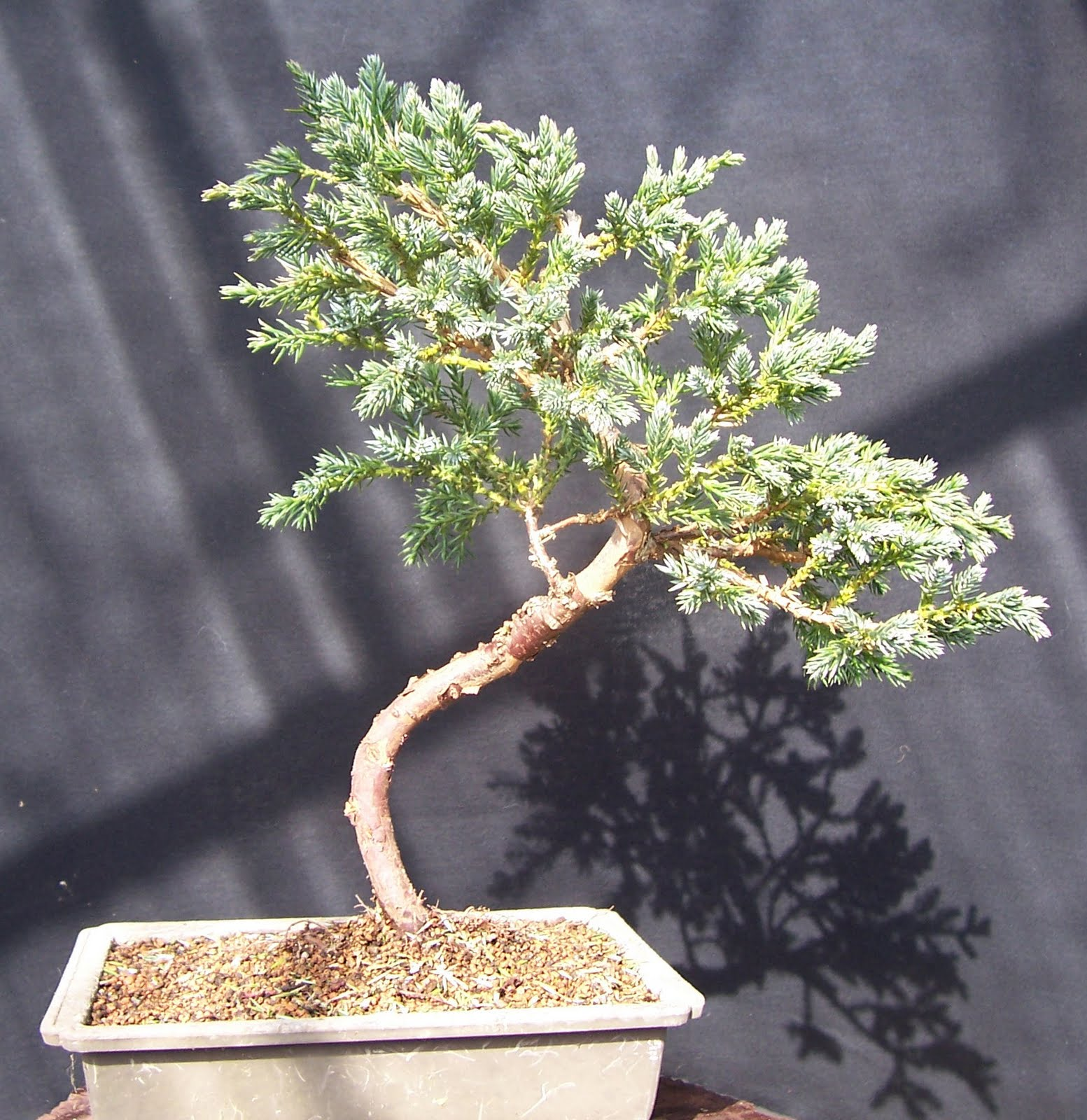 Mikobonsai Articles