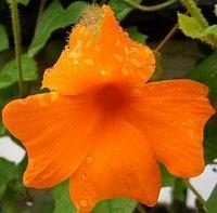 [arleneflower]