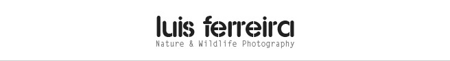 Luis Ferreira - Nature & Wildlife Photography
