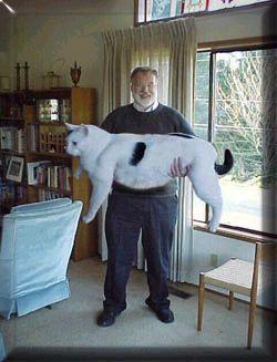 dulu ramai penggemar kucing gempar dengan kemunculan ga