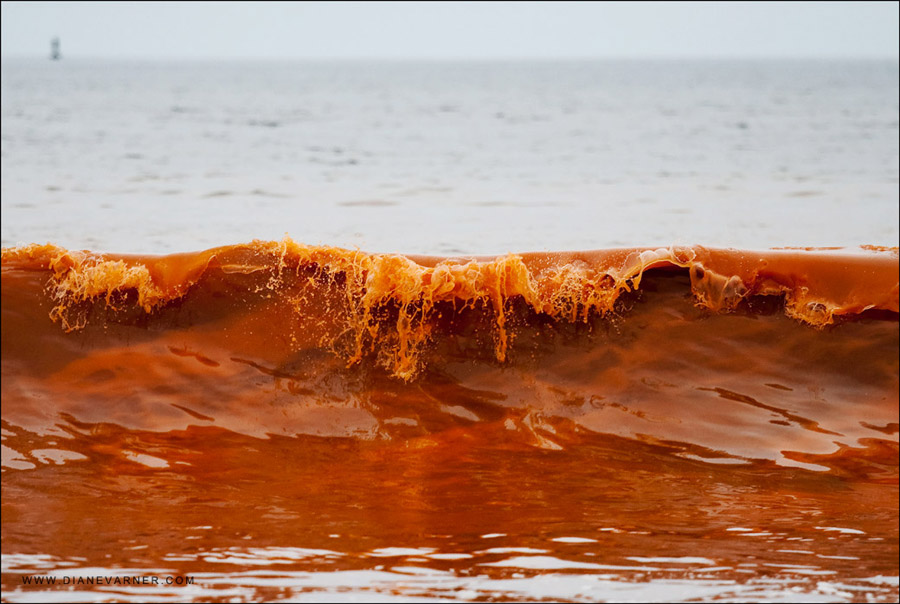 floridas red tide an ongoing problem Florida has declared a state of emergency after a prolonged and severe outbreak  of toxic algae in the sea known as the red tide.