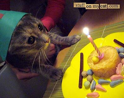 Happy birthday Anti Birthday%2Bcat%2Bpotential%2B2