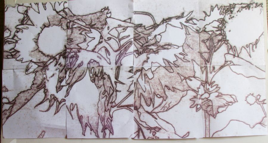 Sunflower Line Drawing : Artbycrain: my sunflowers~continued enlarging a drawing