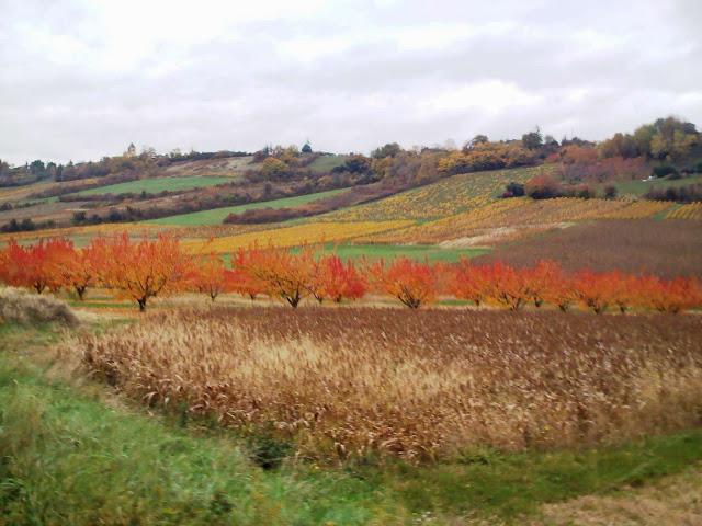 beaujolais vers st jean les vignes