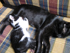 Bridget e Brenda as gatinhas!!!