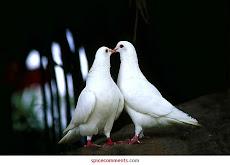 Pax y amor