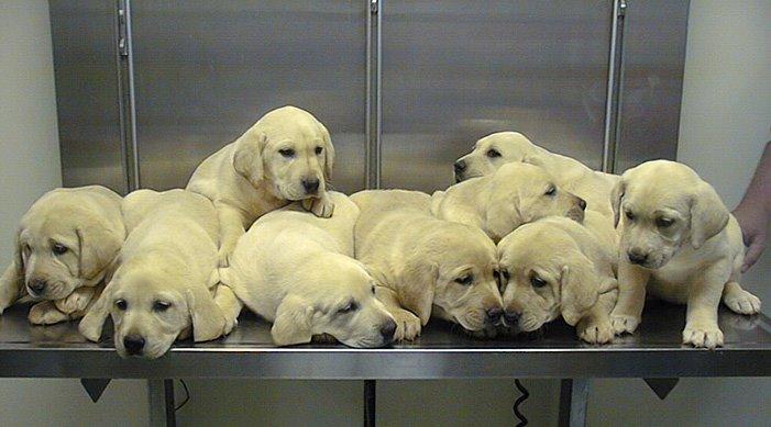 [gianonni+puppies]