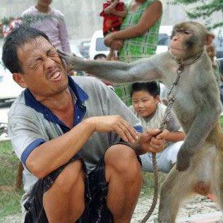 monkey-slap.jpg