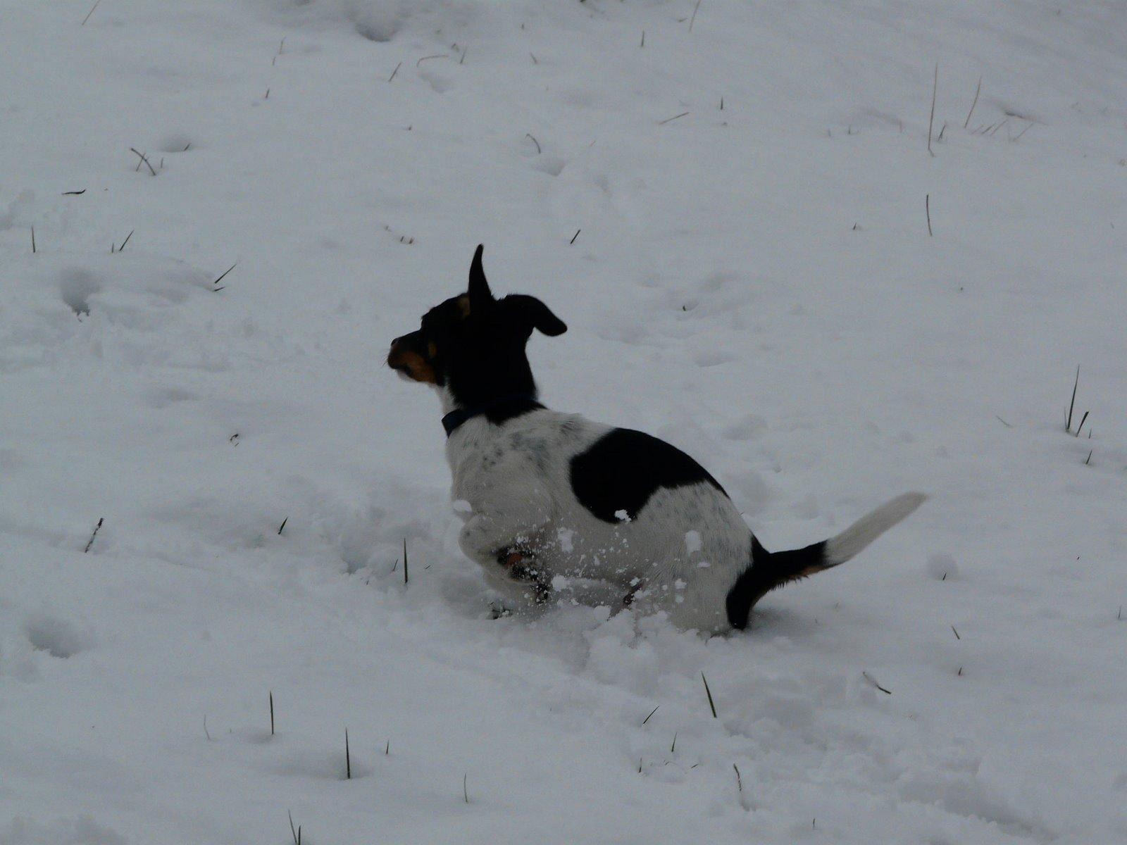 [snow5.jpg]