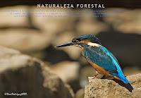 pagina principal naturaleza forestal