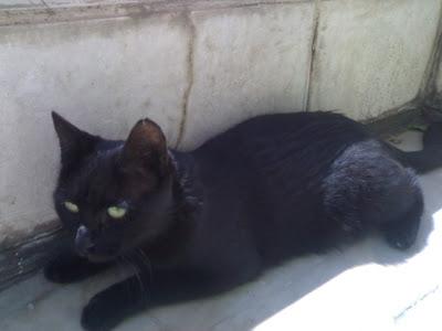 گربه من